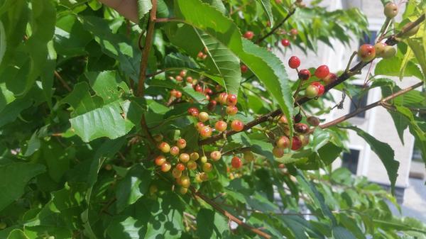 крупный план листьев и ягод