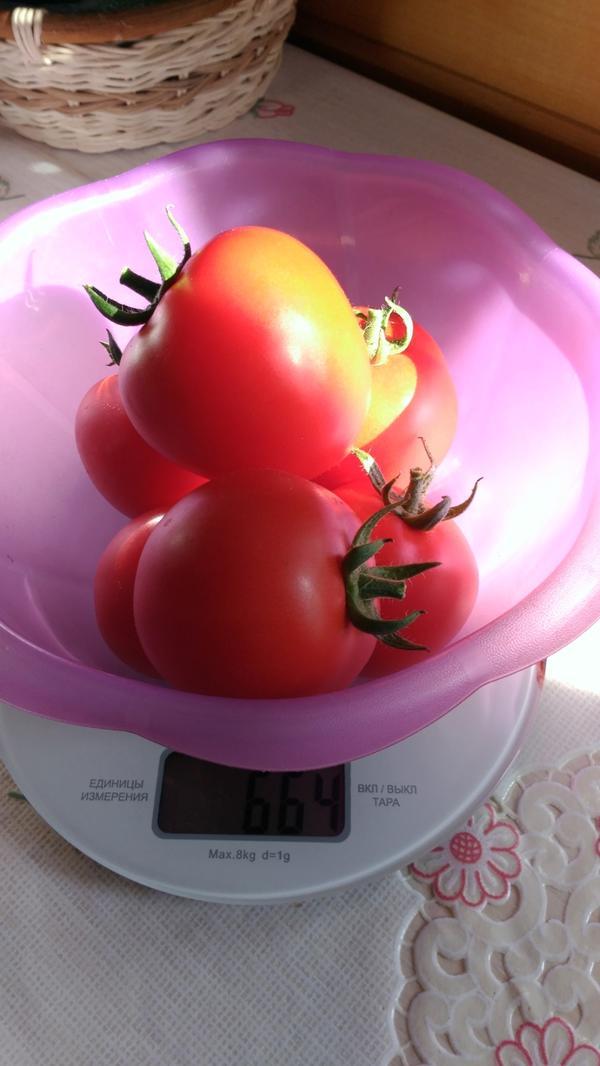 Вес шести плодов- 664г.