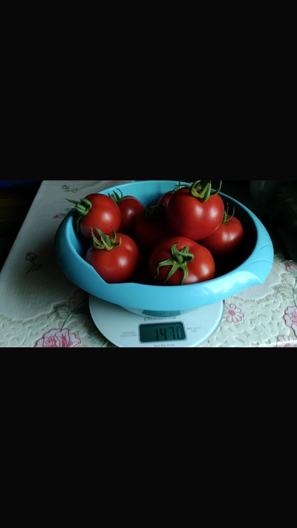 Вес 14 -ти штук составил 1,470 кг. А помидорчики как с картинки.Хоооши и в заготовках,и в салатах.