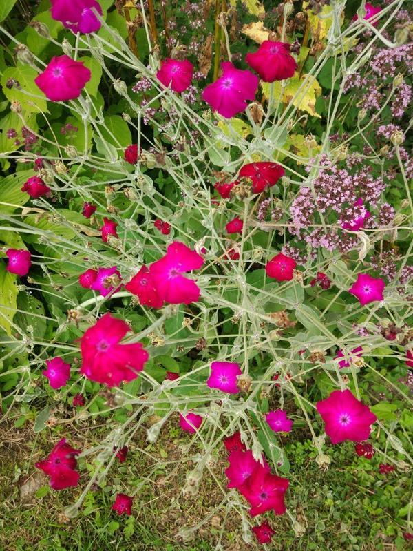 Может кто подскажет что это за цветочек такой?  Красивые, яркие, а не знаю даже что за цветы((