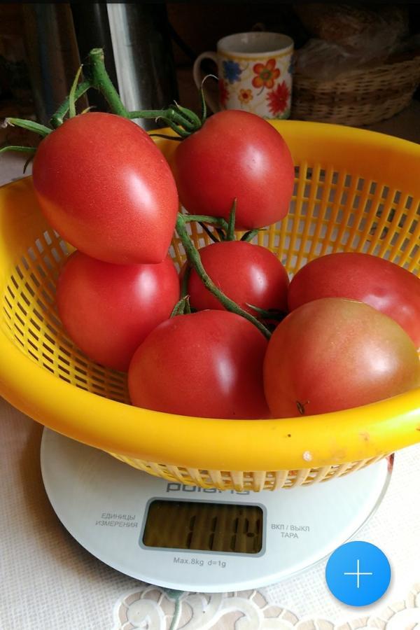 Эта кисть весит 1кг114г.В ней семь томатов.Предыдущая кисть с Малиновой империи N1 весила 822г.