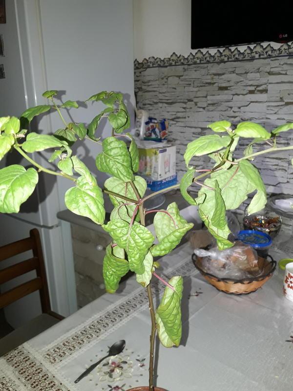 Помогите определить название растения.
