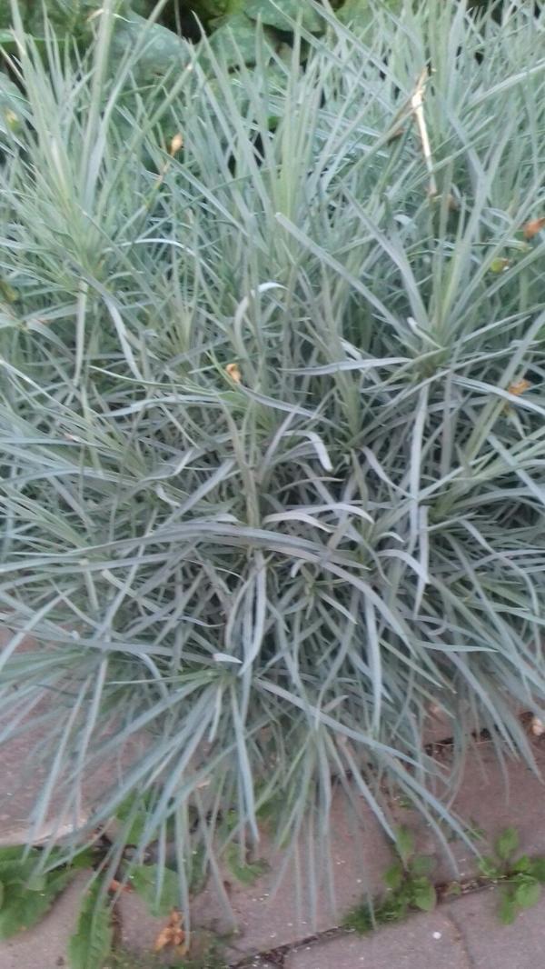 неизвестное растение..?