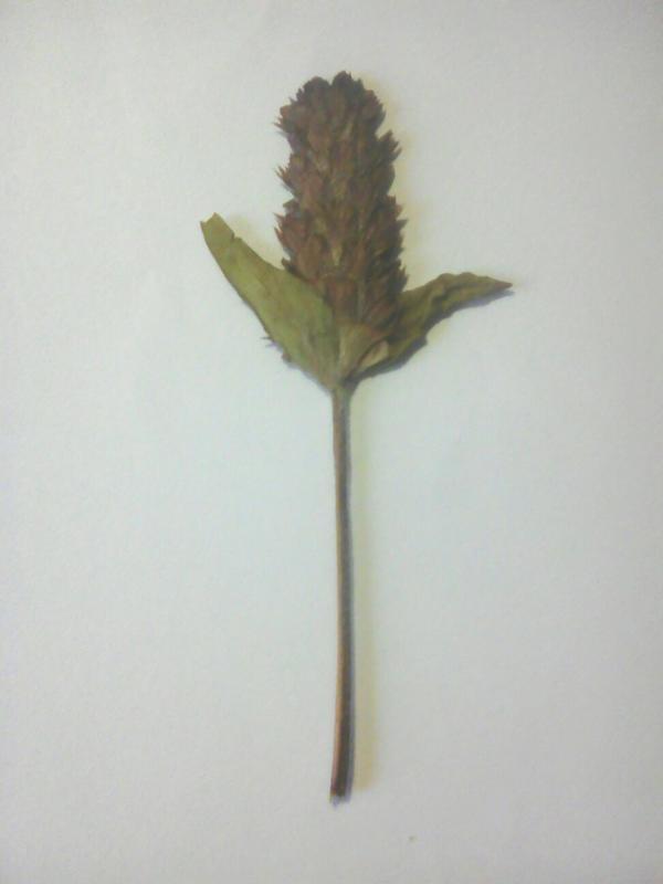 подскажите пожалуйста как называется этот цветок