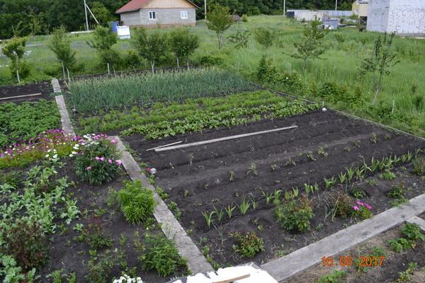 Общий вид огорода.