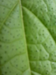листики у него с черными точечками