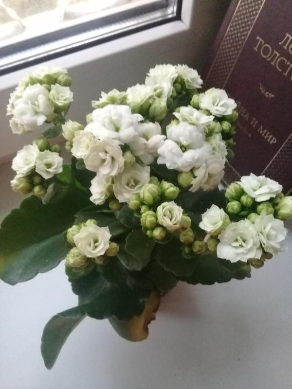 Как называется растение???