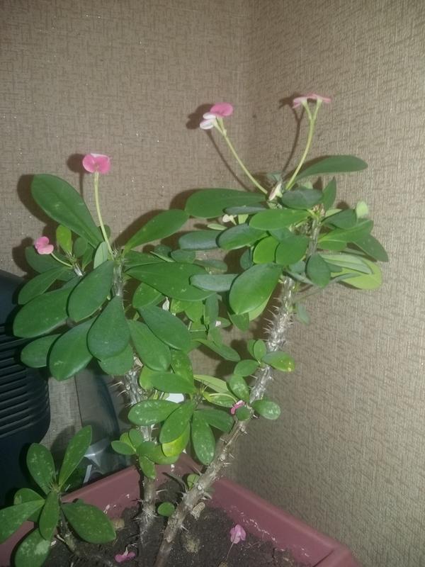 Кто знает как называется этот цветок?