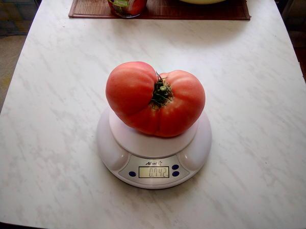 помидор и весы