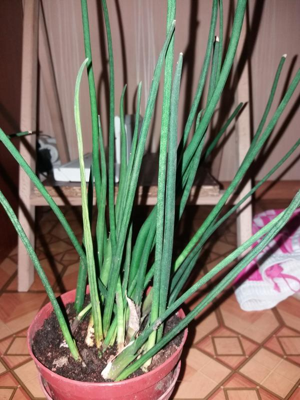 Комнатное растение.