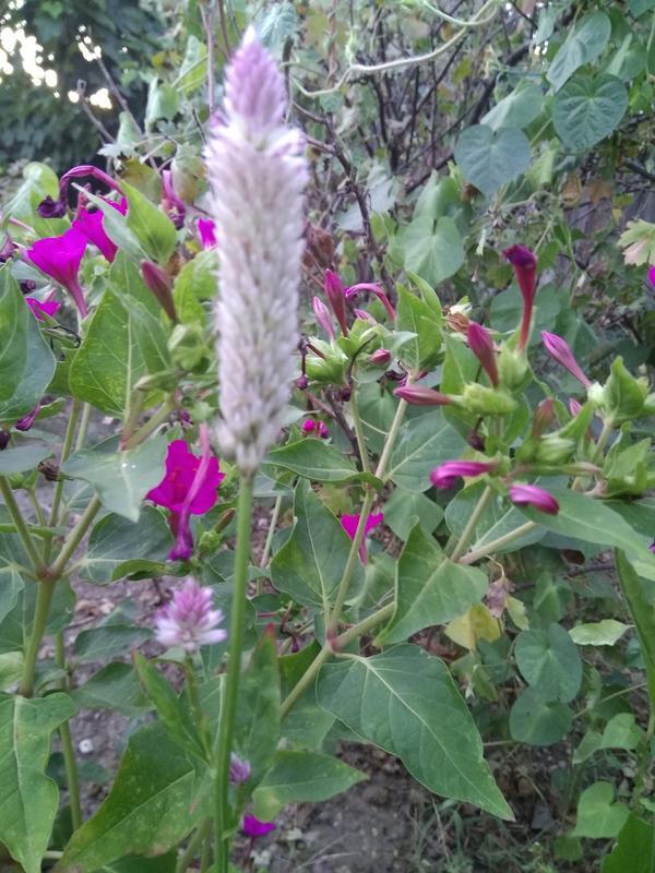 Добрый день. Помогите пожалуйста определить растение. Купили на алиэкспресс как мухоловку)