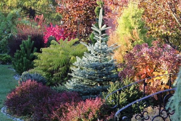 Осень в саду.