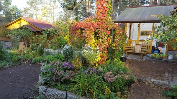 Любимый цветник под сосной