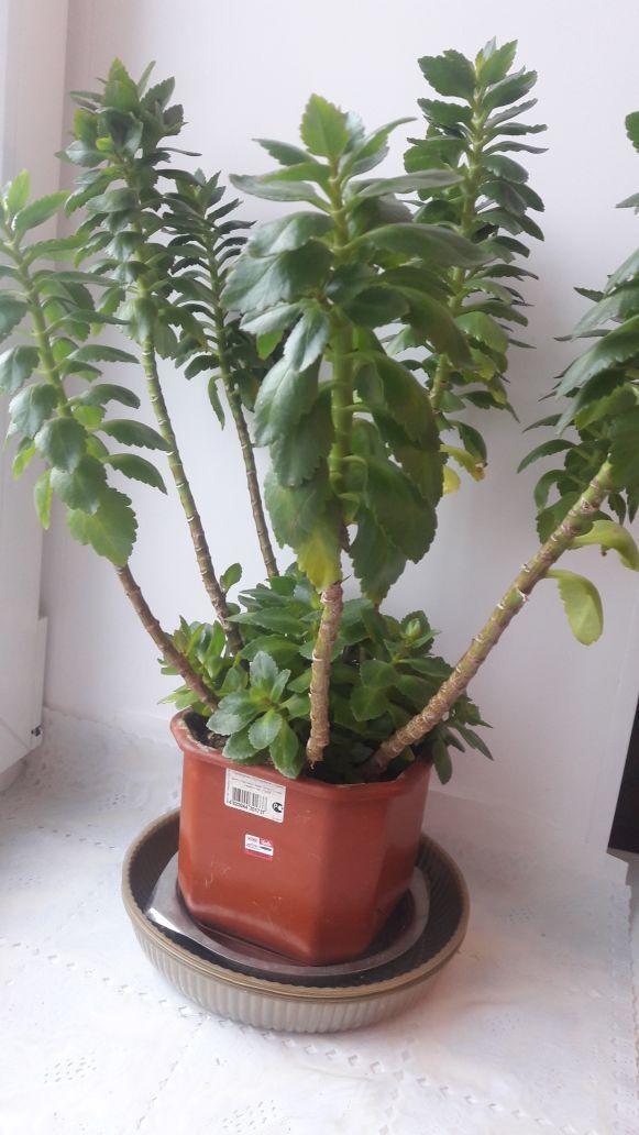 Какое растение?