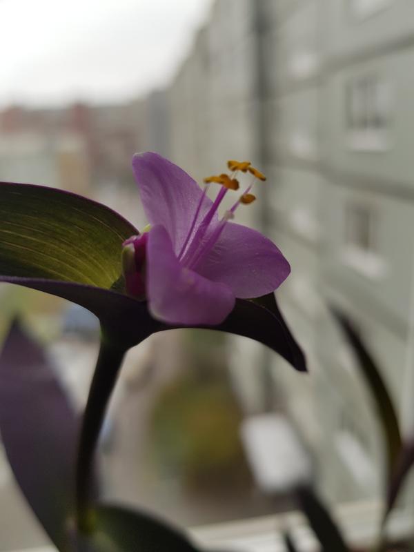 Вот так цветет