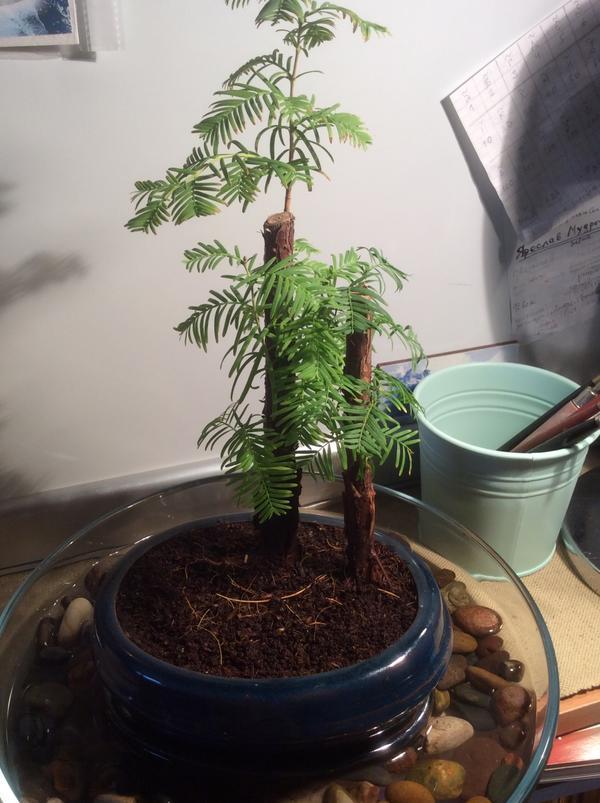 Фотография растения