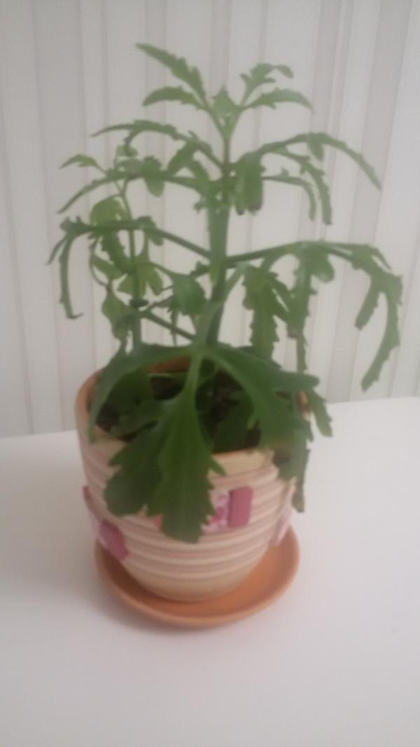 Как называется это комнатное растение