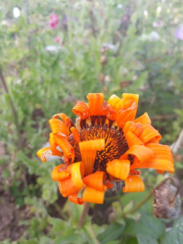 Единственное фото цветка (((