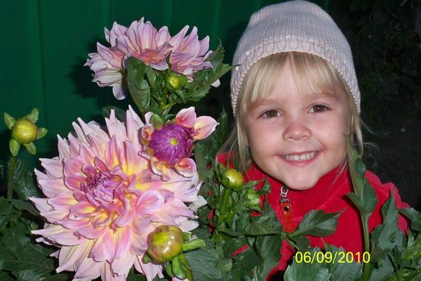 Сорт Мантиешка всегда радует нас своим цветением