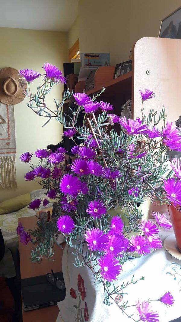 Подскажите,пожалуйста, название этого цветка. Заранее спасибо.