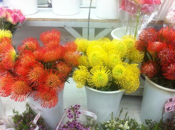Вот такие хризантемы в Гонконге на цветочном рынке