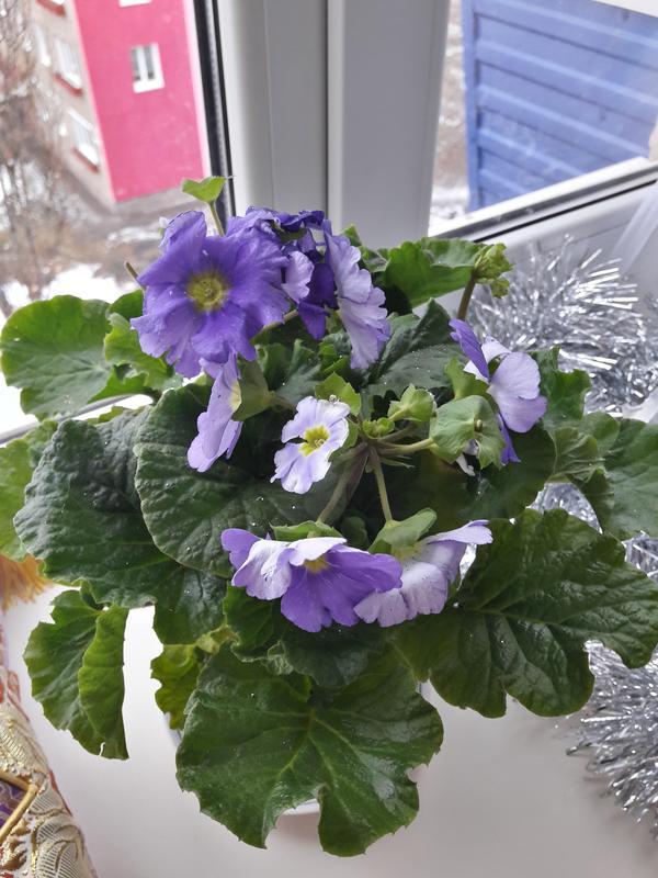 Помогите с названием цветка!?