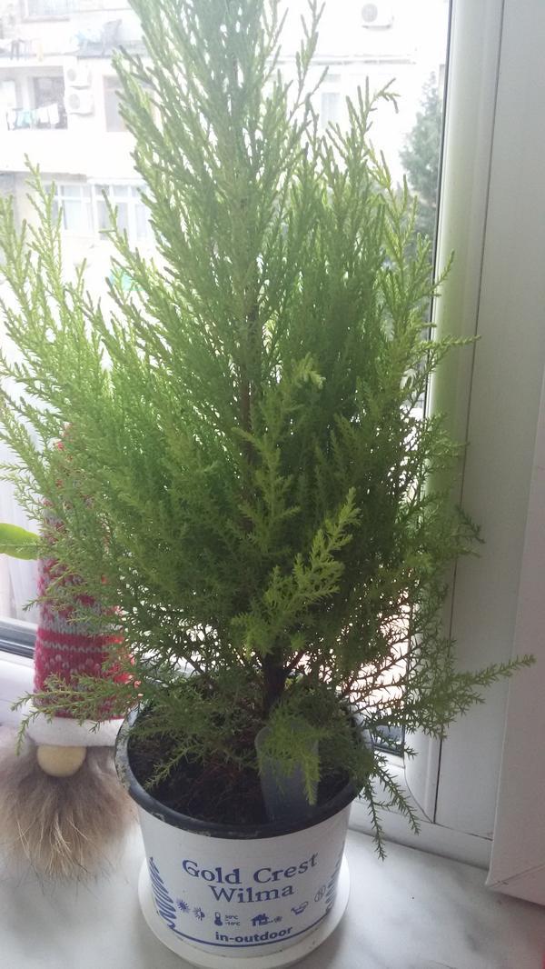 Что за растение и как ухаживать за ним
