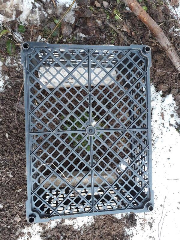 Этап 3. Присыпаем землёй. Накрываем ящиком и укутываем спанбондом в 4 слоя. Чтобы ёлочка весной не подгорела.