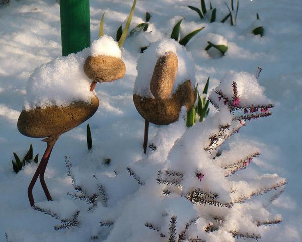 цветущий вереск ушёл под снег