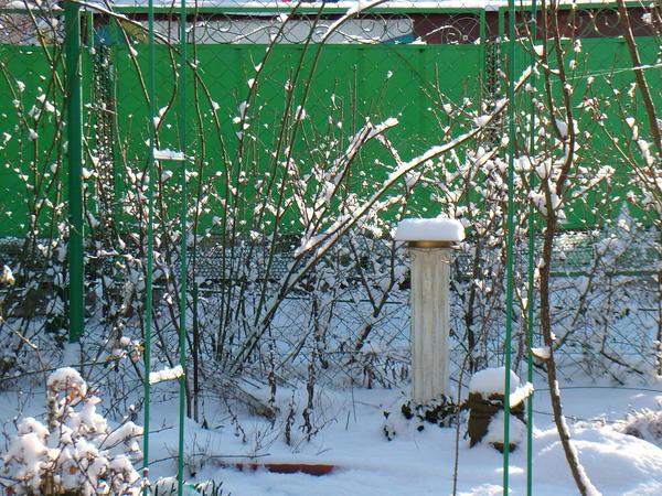 ещё один уголок зимнего сада