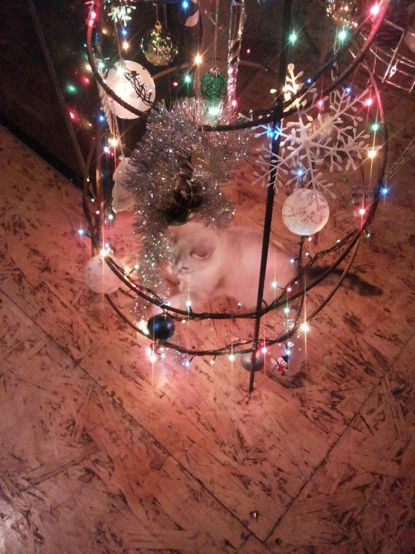 А это с огоньками. Котёнка ей очень интересуется.