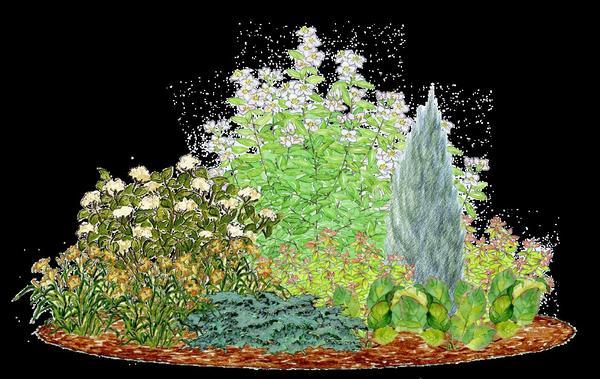 А возле чубушника до посадки вишни планировалась вот такая композиция