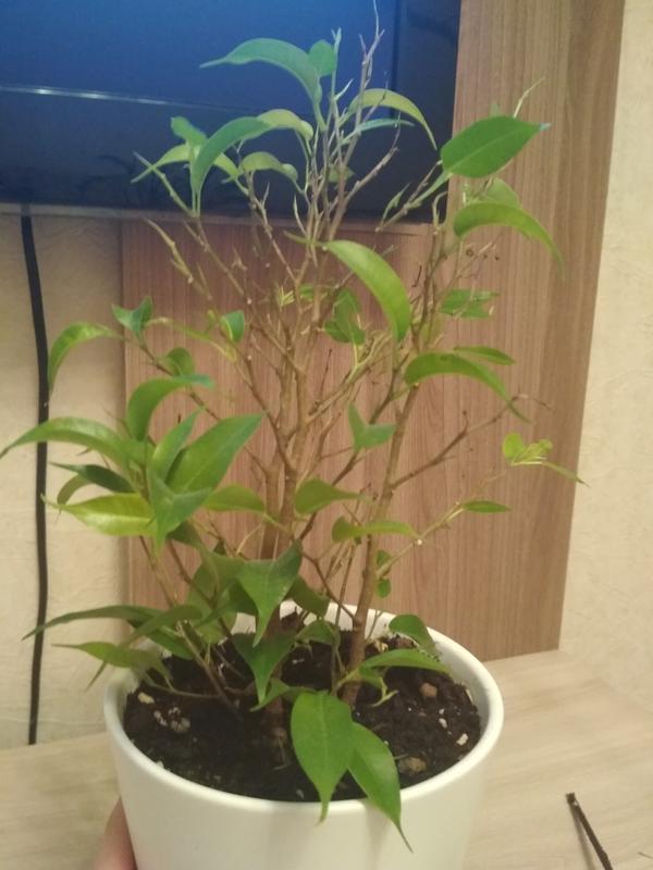 Подскажите, что за растение, не знаю как правильно ухаживать.