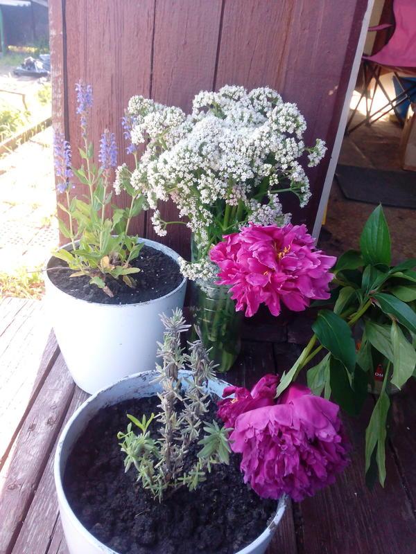 Лютики, цветочки :)