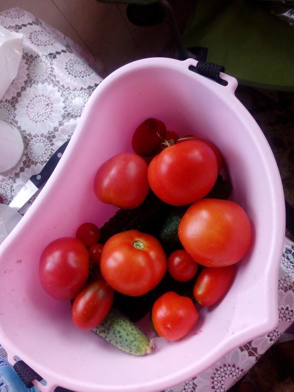 Урожай, мои первые томатики 2017