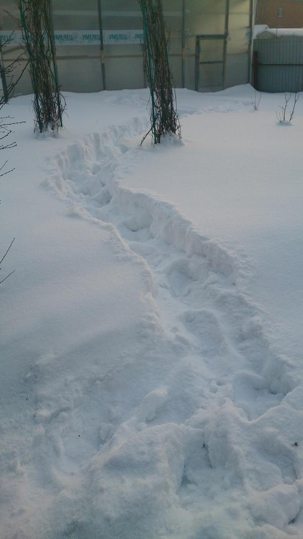 По снегу налазилась вдоволь! Планировала посадки растюшек.
