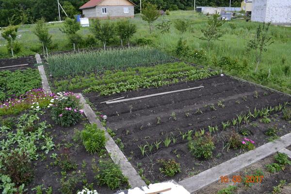 Вот такой общий вид огорода.