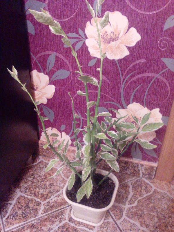 добрый день, подскажите, пожалуйста название растения