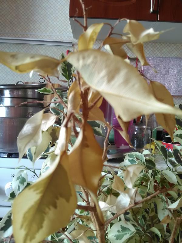 Сухие листики поближе.
