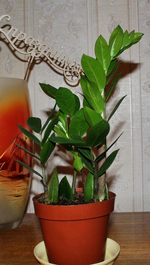 Помогите узнатьназвание растения....