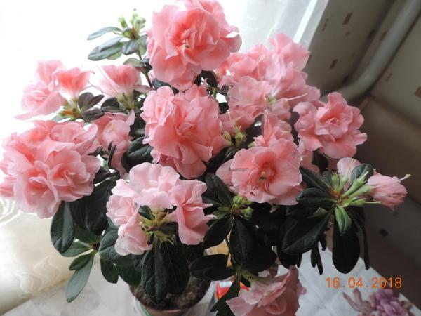Здравствуйте!подскажите пожалуйста название цветка