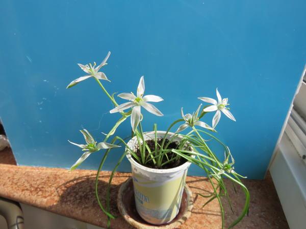 Помогите опознать это растение!