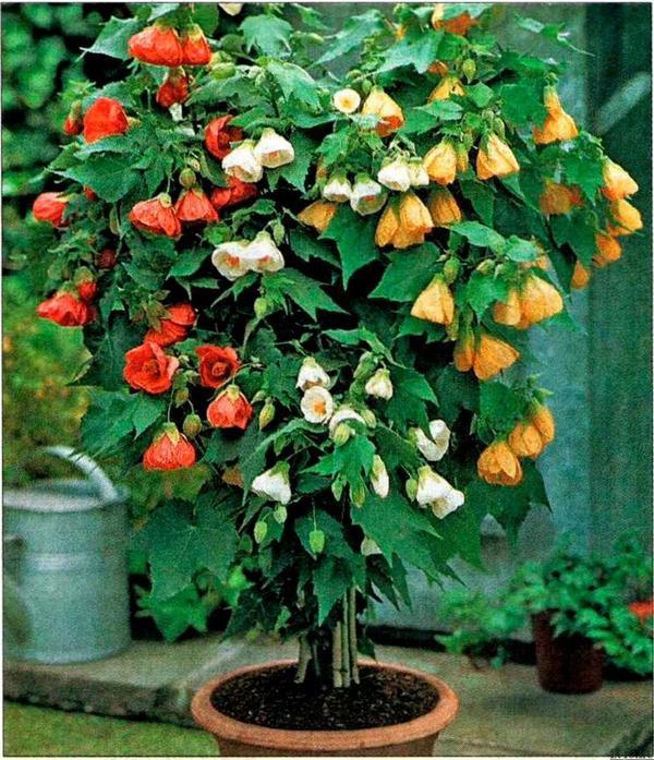 Разнообразного цвета цветки