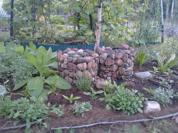 Растения - эдельвейс. Боялась, что померзнут зимой, но ничего, все выжили.