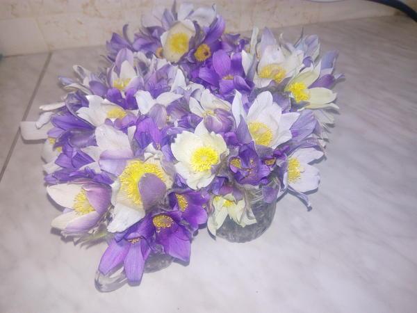 Как называются эти цветки,скажите пожалуйста