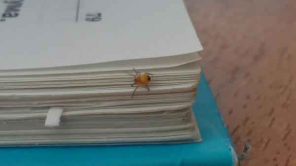 Что это за паук?Мне просто любопытно.