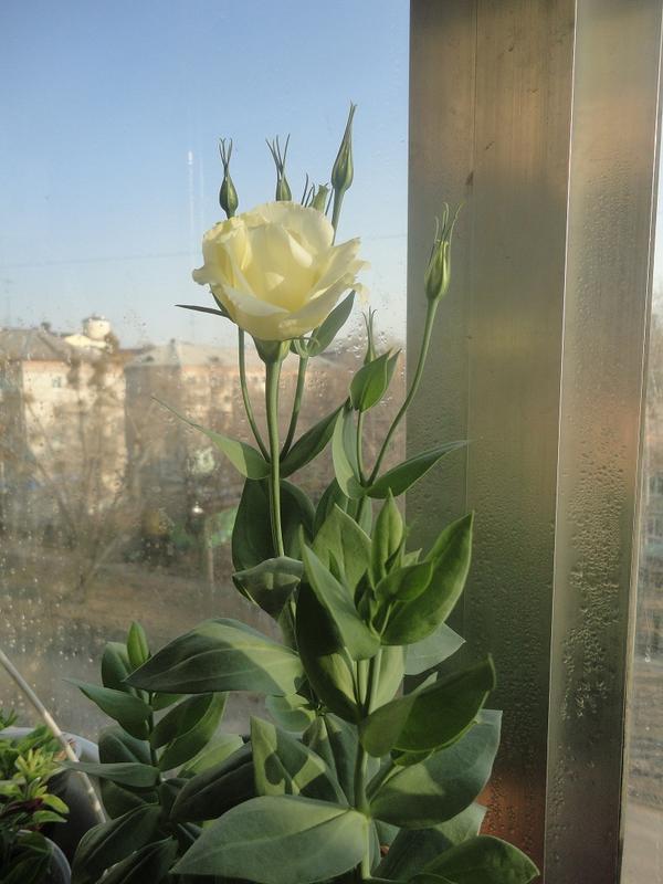 за окном - ранняя весна