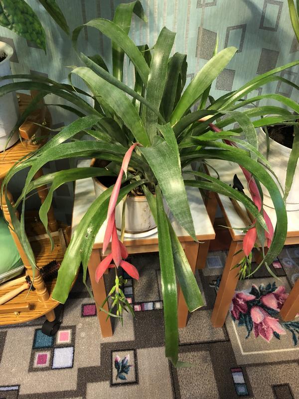 Подскажите пожалуйста название цветка и как за ним ухаживать в домашних условиях?