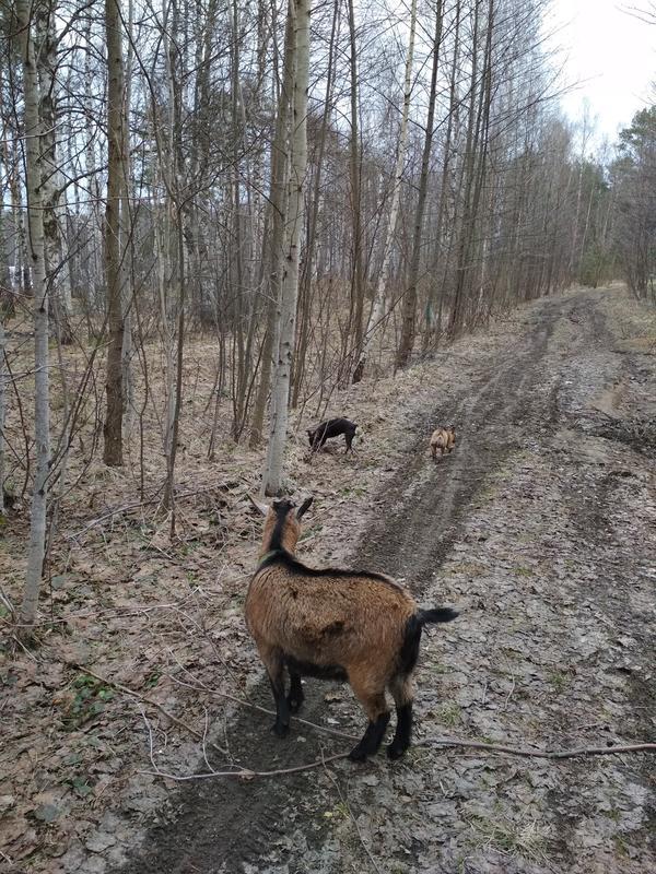 На прогулке с собаками в апреле.