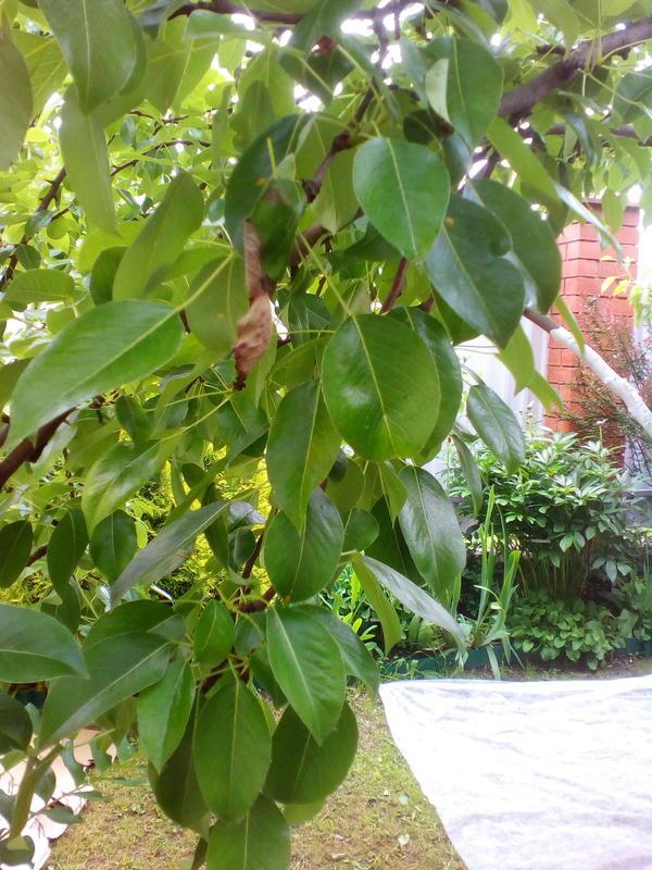 1. Вот веточка заболевшего дерева